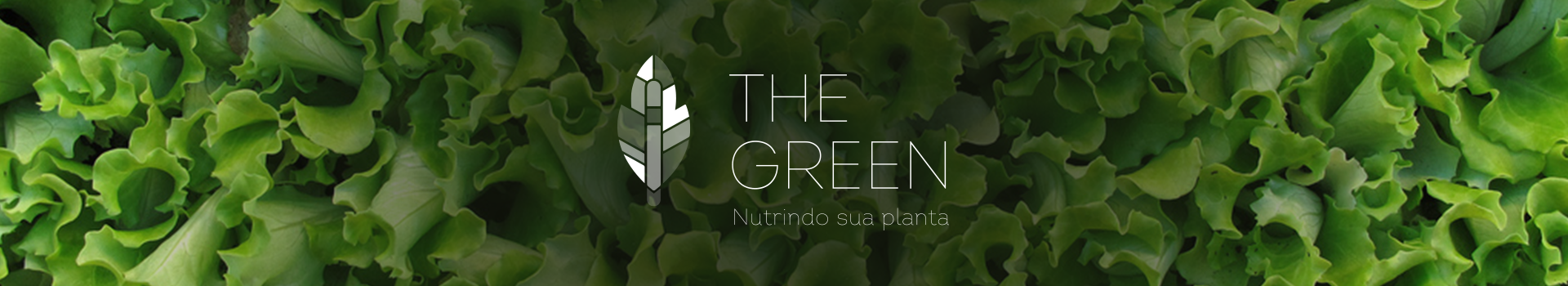 The Green nutrindo sua planta